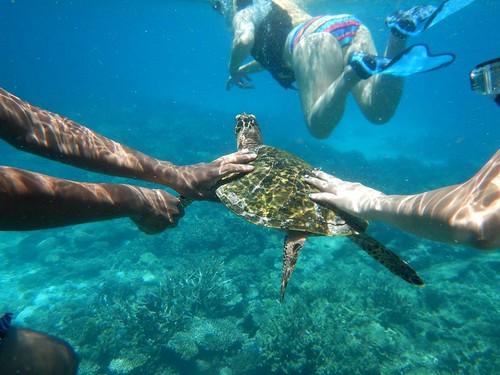 馬爾地夫漂浮船!海龜~怎麼秋天剛到就開始懷念夏天了呢?XD (Nikon AW130拍攝)
