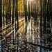 sunset in a marsh by jody9