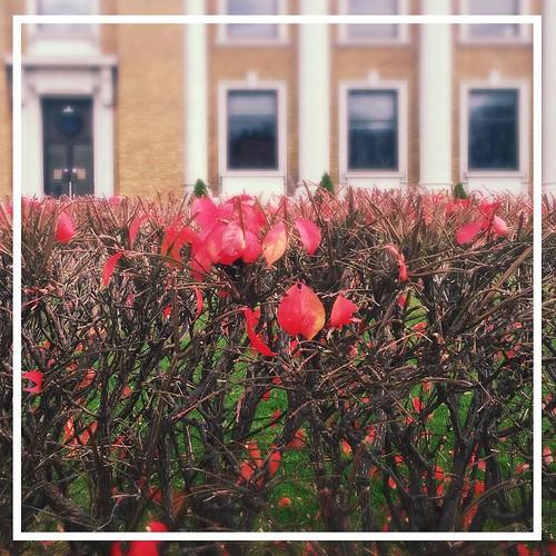 November 18 - Flora