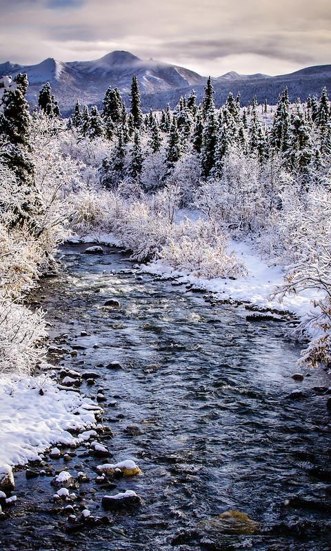 Early Snow - Denali NP