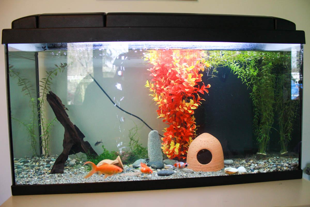 Aquarium de Sam Soul 23744354131_65af8724b2_o