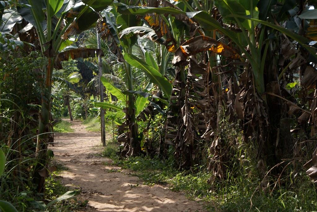 Chemin de terre entouré de bananiers au bord des voies navigables dans le delta du Mékong.