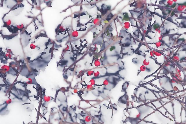 Motiv fotografiranja: Zima i snijeg - Page 6 24038065132_391dd23169_z