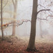 Wendover Woods, Buckinghamshire by greeneyedlens