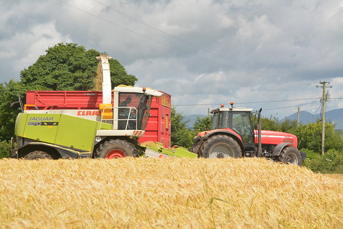 Claas Jaguar 870 SPFH filling a Broughan Engineering Mega HiSpeed Trailer drawn by a Massey Ferguson 8240 Tractor