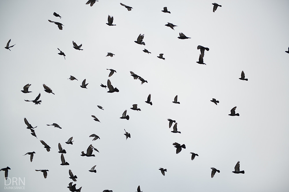 Flock.