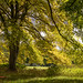 A Tinge of Autumn by TDR Photographic