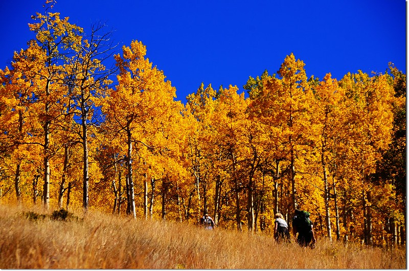Fall colors at Kenosha Pass, Colorado (30)