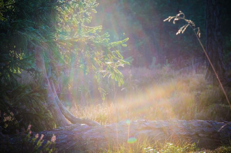 syksy_metsä-3