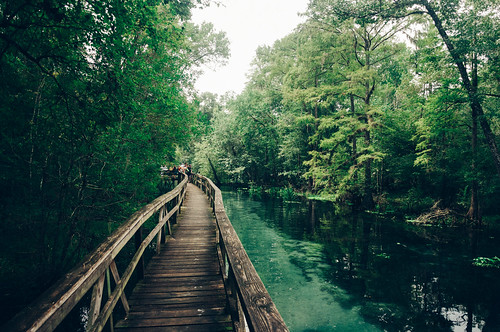 wood trees wild green classic nature water forest vintage river landscape spring woods florida cloudy overcast retro walkway boardwalk naturalbeauty campground polarizer highsprings gilchristcounty bluespringspark vsco springhunters vscofilm bluespringrun gilchristbluespring