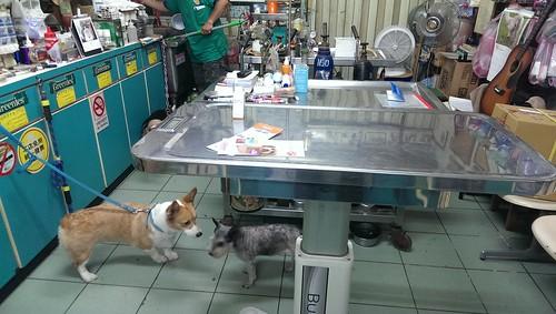 中和長榮動物醫院