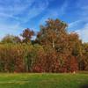 Lovely fall day #vscocam