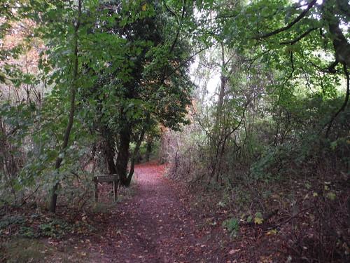 Uphill through Jevington Holt