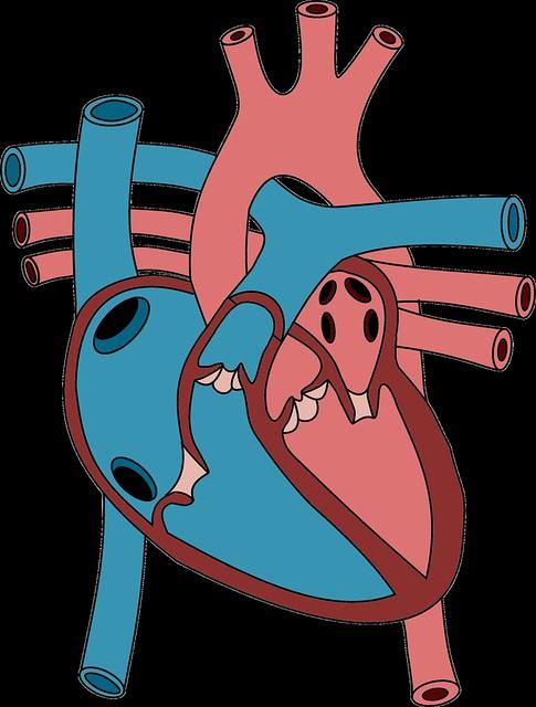 heartDraw