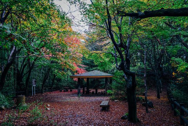 Jyokoji_17