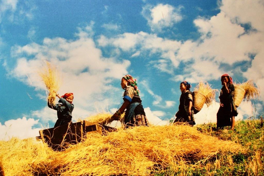 Travail dans les champs, photo du musée de la femme à Hanoi.