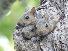 Three Little Squirrels