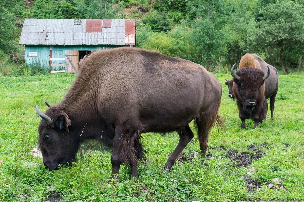 Ферма Зубров в Карпатах