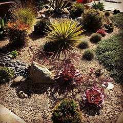 Use to be grass! Succulents and Dymondia along with some pebbles created a easy to take care of garden. #lowwatergarden #rock #dryriverbed #peagravel #designer #design #designlife #alfordsgardens #succulents #dymondia