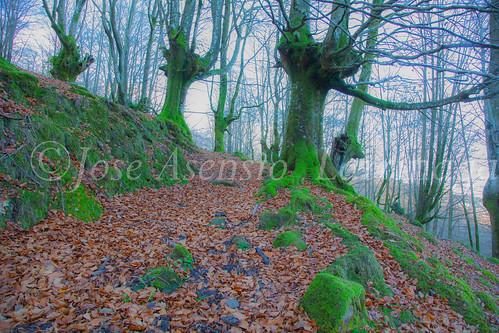 Parque Natural de Gorbeia #DePaseoConLarri #Flickr -2844