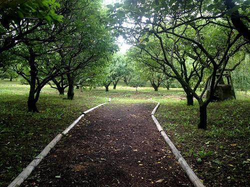 Banpaku park_12