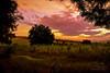 Blazing Meadows