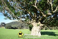 Péninsule Coromandel Nouvelle-Zélande