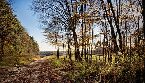 dog beagle colors leaves hike trail dirtroad fall autumn colours nikon d300 topazadjust huntingdog bluesky knarrgallery darylknarr knarrphotography