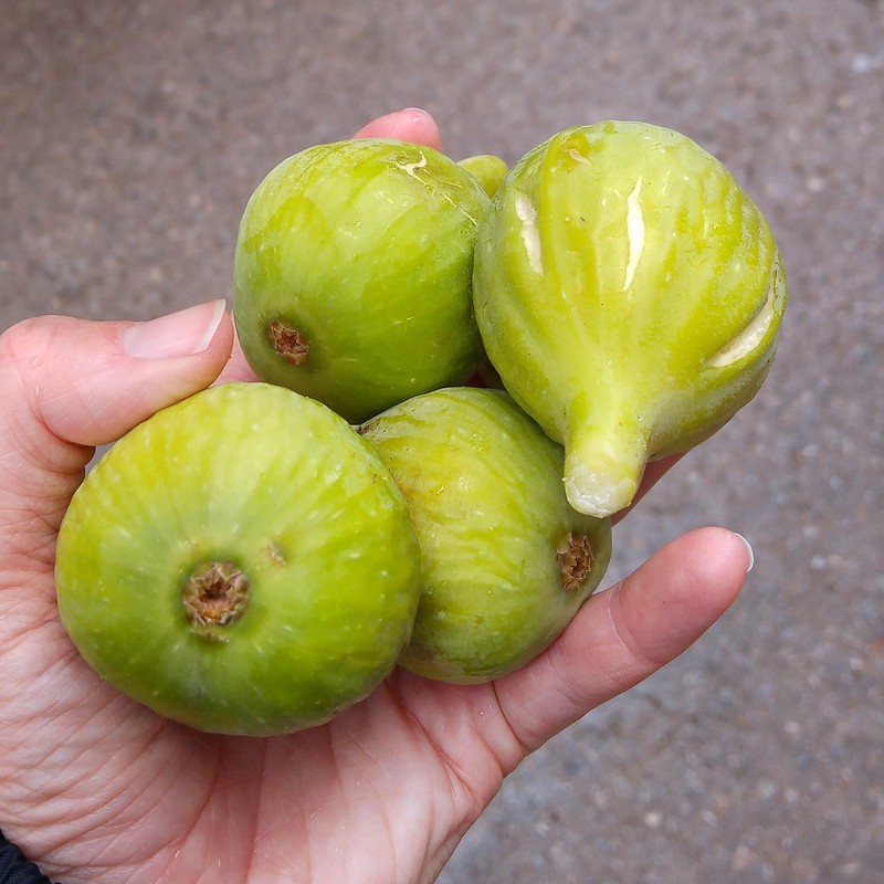 A handful of figs from a stranger