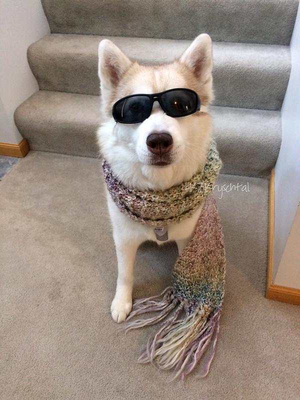 IMG_2765CamGlassesScarf