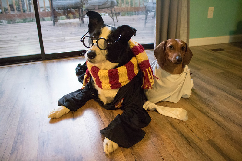 Hairy Pawter and Dobby the House-weenie