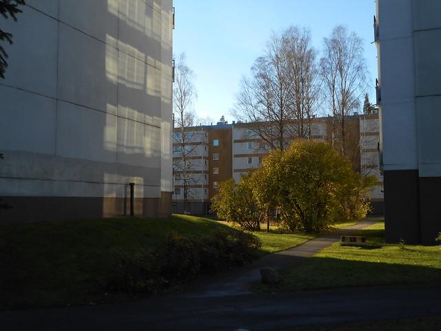 Vielä lehtevä pihasyreeni (Syringa vulgaris), 5.11.2015 Espoo Karakallio