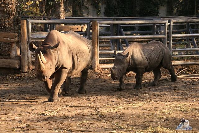 Zoo Berlin 08.11.2015  062