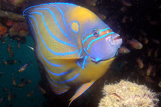 scuba Diving Tioman, Malaysia