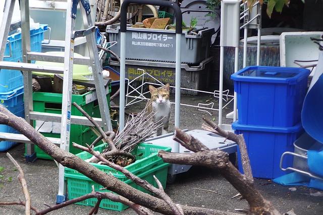 Today's Cat@2016-10-02