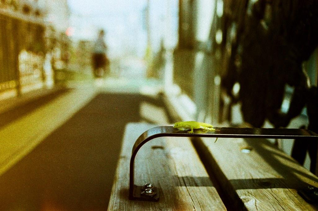 荒川遊園地 Tokyo, Japan / Lomography Slide, XPro / Nikon FM2 不知道是誰遺忘了這隻蜥蜴玩具,說真的,當下看到的時候下一大跳,原來只是玩具。  但後來想想這站是「荒川遊園地前」,會遺留這玩具就不意外了!  那就給它一個大光圈特寫吧,希望它的主人有想起它、回來找尋它。  Nikon FM2 Nikon AI AF Nikkor 35mm F/2D Lomography Slide / XPro 200 ISO 35mm 4942-0001 2016/05/22 Photo by Toomore
