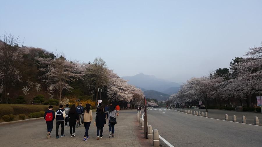 Nguyen, Anna; South Korea - Episode 12 (2)