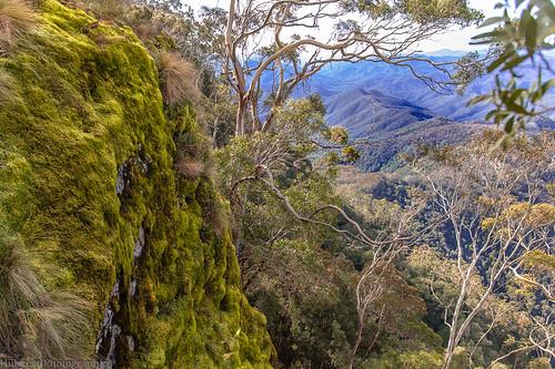 cliff mountains moss view ranges eucalyptus gumtrees