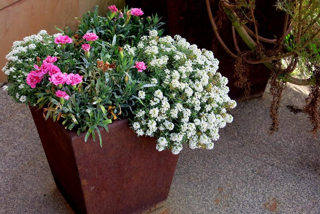 una maceta de hierro con flores