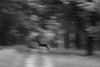 Speed!          [Crossing deer] by RW-V