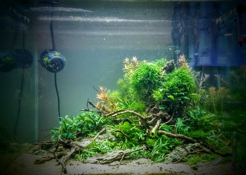 33G Aquascape