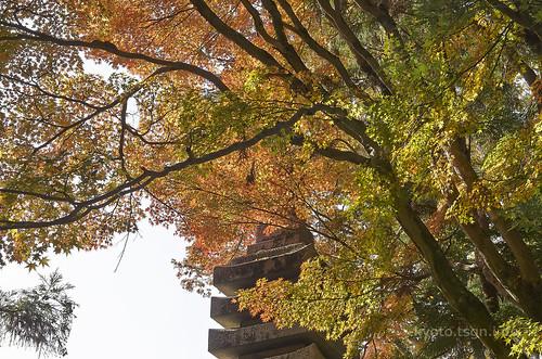【写真】2014 紅葉 : 法然院/2018-10-19/IMGP7490