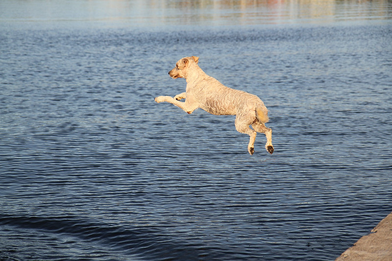water fetch13