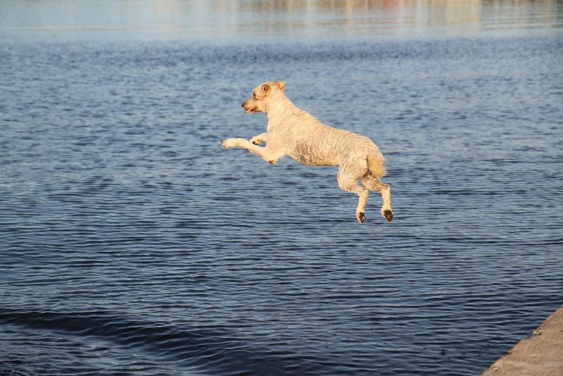 water fetch13