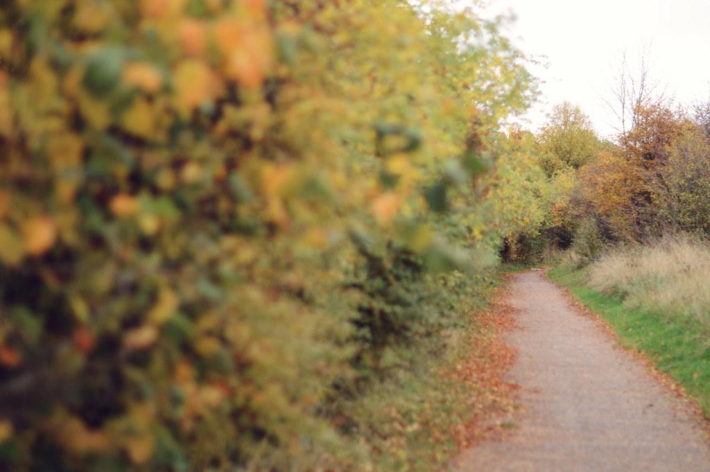 autumnwalk6