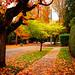 Deep Autumn in Vancouver by TOTORORO.RORO