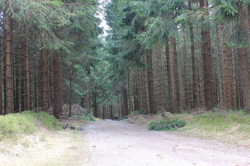 Thüringer Natur am Winterende