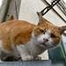 近所の猫 by Umaibo2008