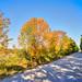 Fall into Winter - Equinox to Solstice #17 - Autumn Lane