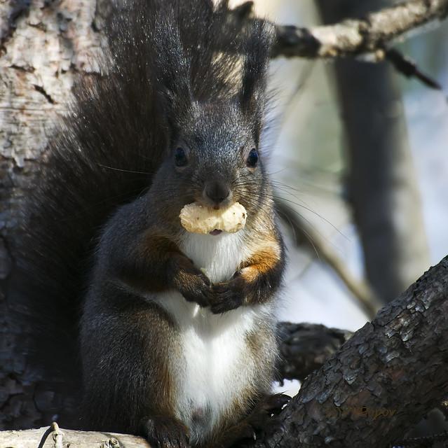 Squirrel, Nikon 1 J5, 1 NIKKOR VR 70-300mm f/4.5-5.6